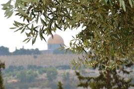 Kopuła na Skale - widok z Góry Oliwnej