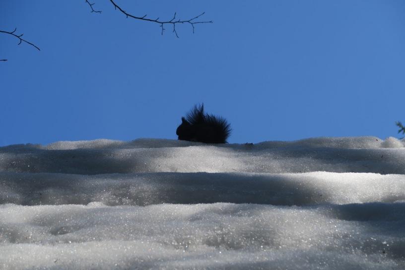 Dolina Strążyska, wiewiórka
