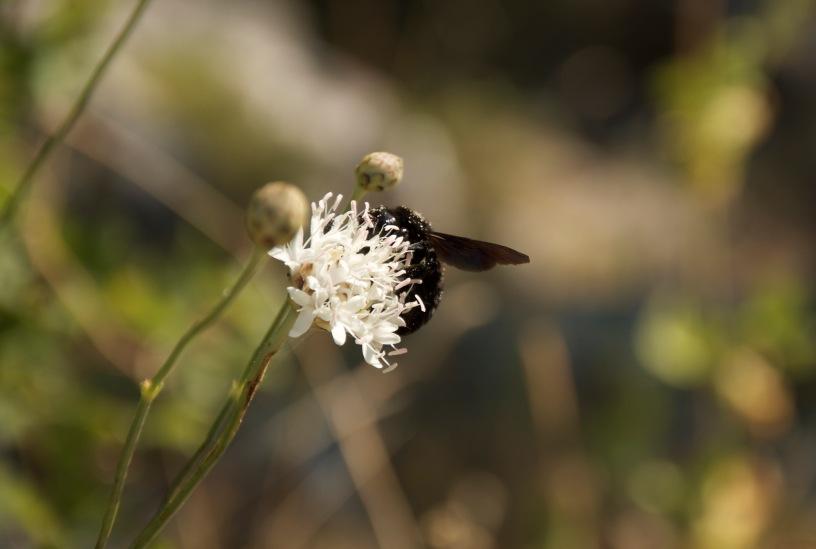 Biokovo, fauna i flora