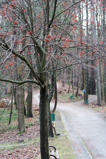 Szlak na Góre Parkową