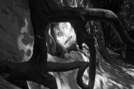 kazimierz wąwóz korzeniowy